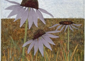"Theodore Roosevelt National Park Coneflowers, 20""x 20"""